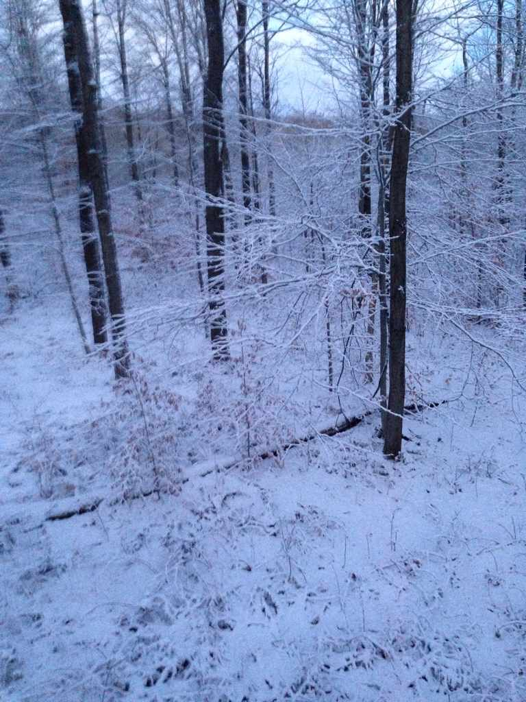 Snow in wny deer hunting hunting new york ny empire for Snow bear ice fishing