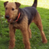 Got my mount back - last post by airedale