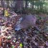 NYS public hunting locations - last post by chiefbkt