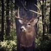 NY Trophy Hunter