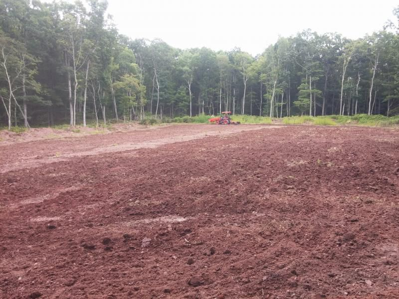 Are Turnips Good For Food Plots