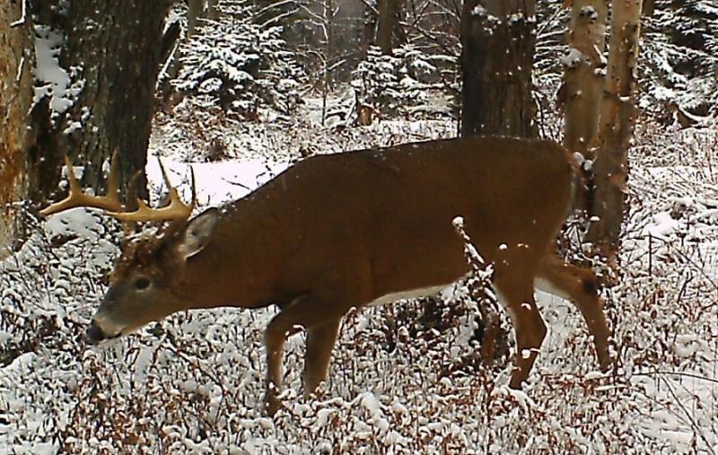 2014 adirondack buck  tracking  - deer hunting
