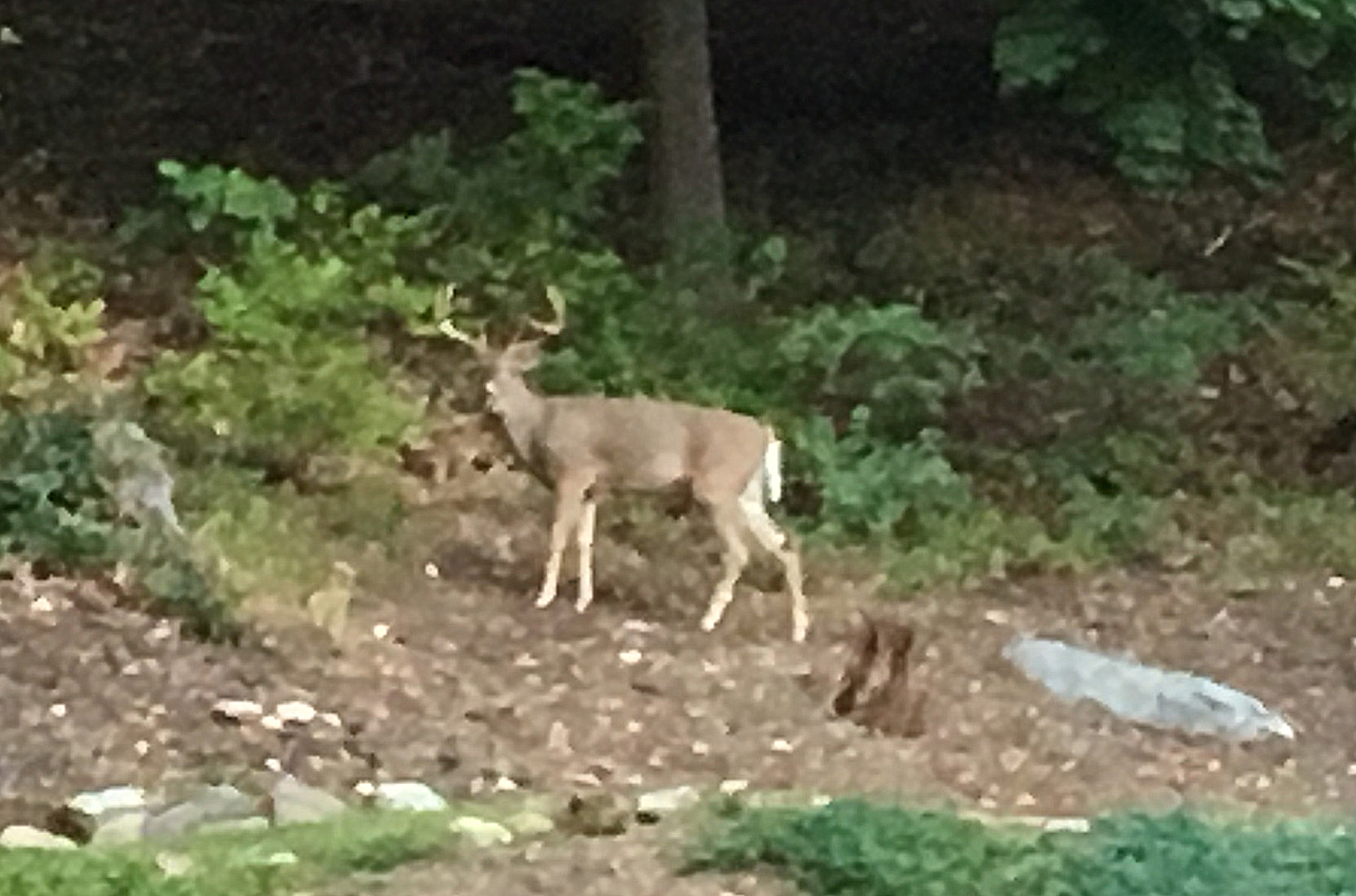 right in my backyard deer hunting hunting new york ny