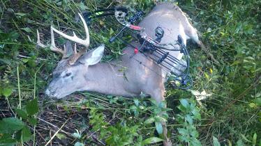 Archery Buck 2.jpg