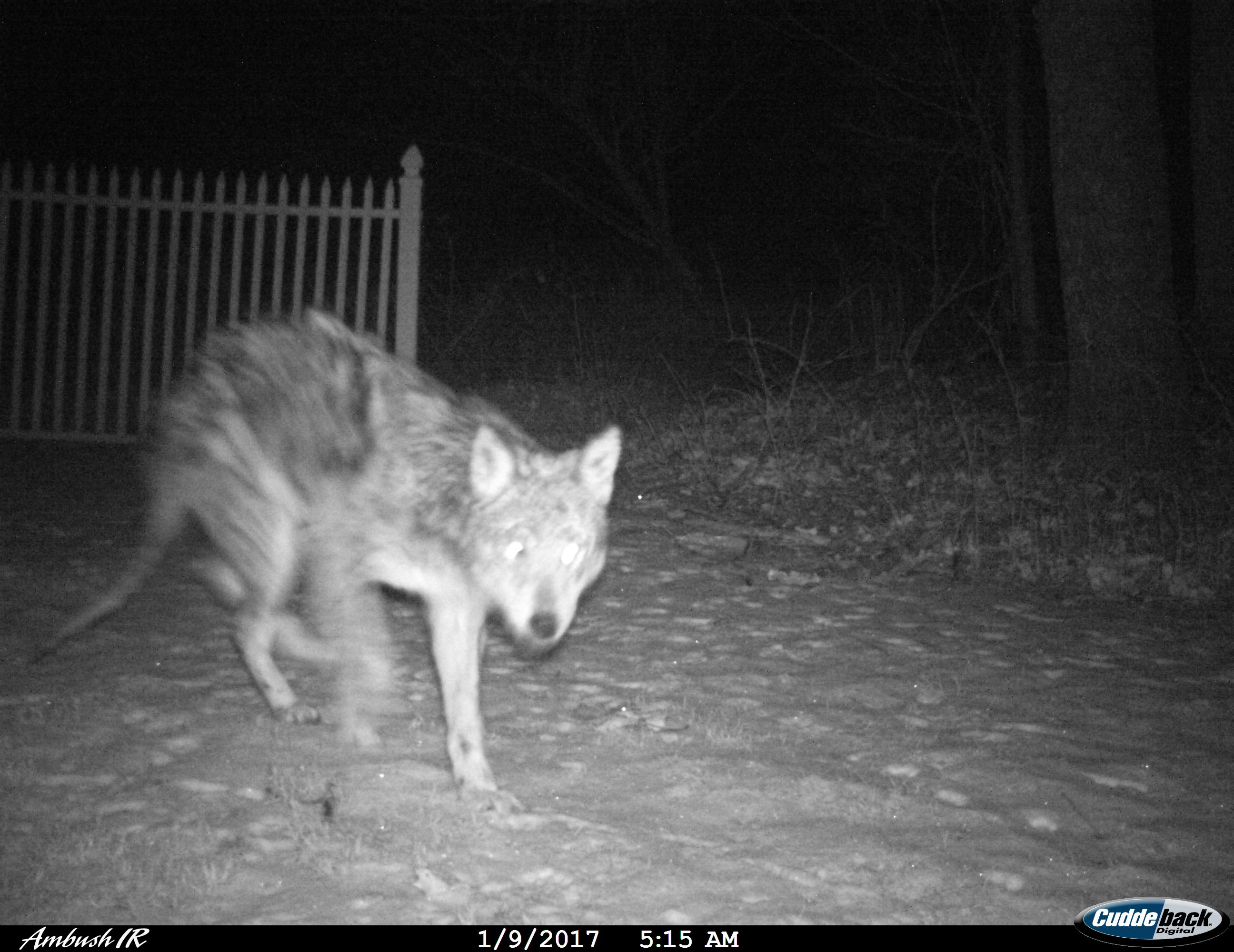 i feel bad for him trail camera pictures hunting new york ny