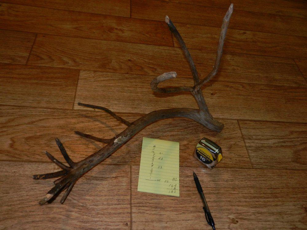 Right side 12 pointer shed.jpg