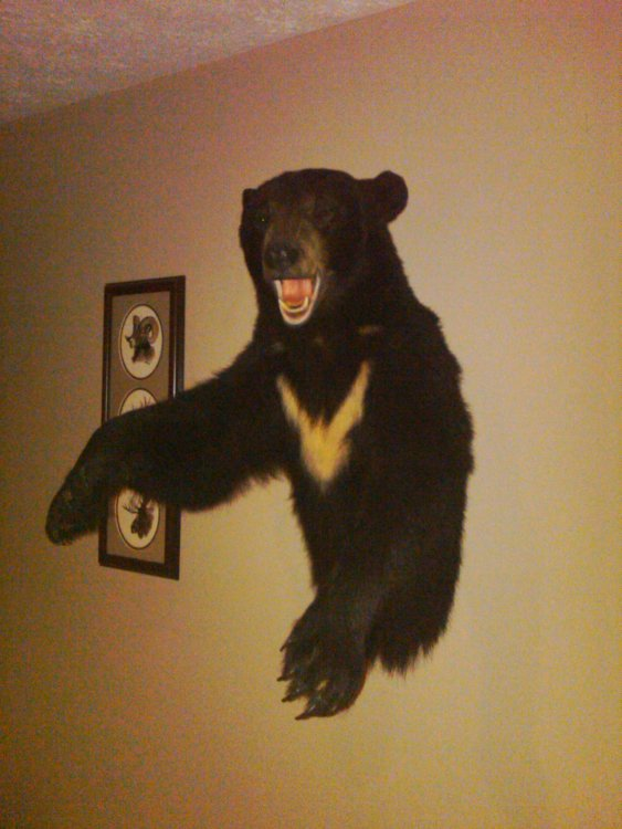My bear.jpg