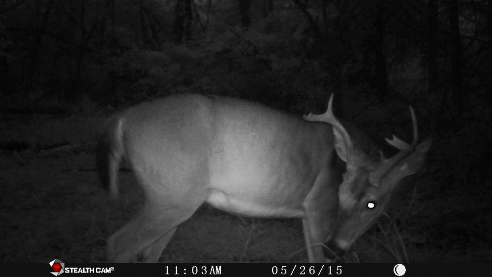 First cam pull in years - Trail Camera Pictures - Hunting
