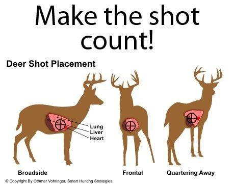These foam targets vitals are wrong right deer hunting vitalswrongg80efc0012d9363ed95656a0e61154831g ccuart Choice Image