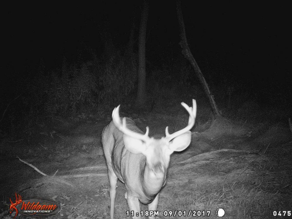 huntin hole buck 2.jpg