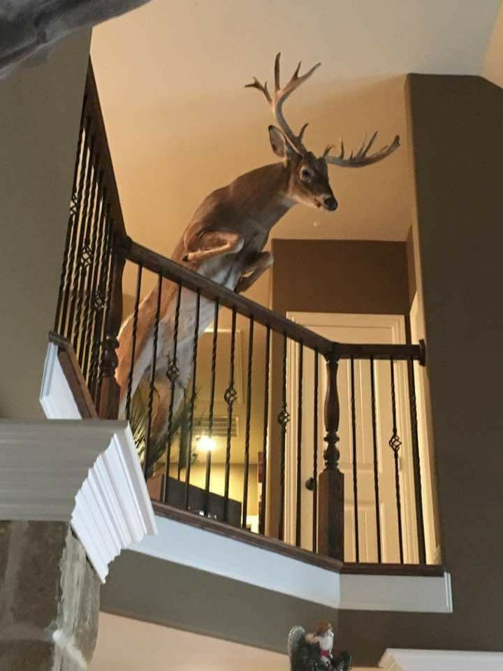 Cool deer mount - Taxidermy - Hunting New York - NY Empire