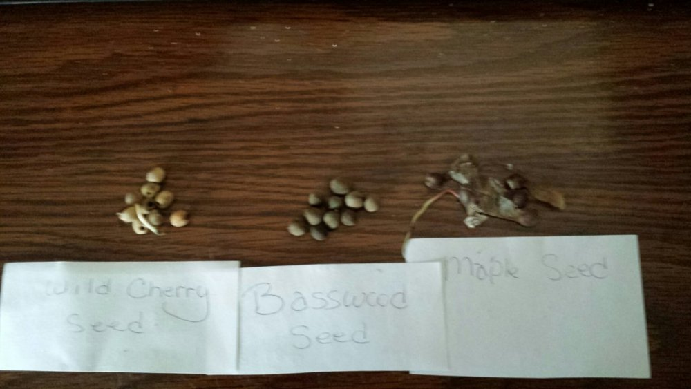 tree seeds.jpg