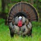 TurkeyHuntPA_NY