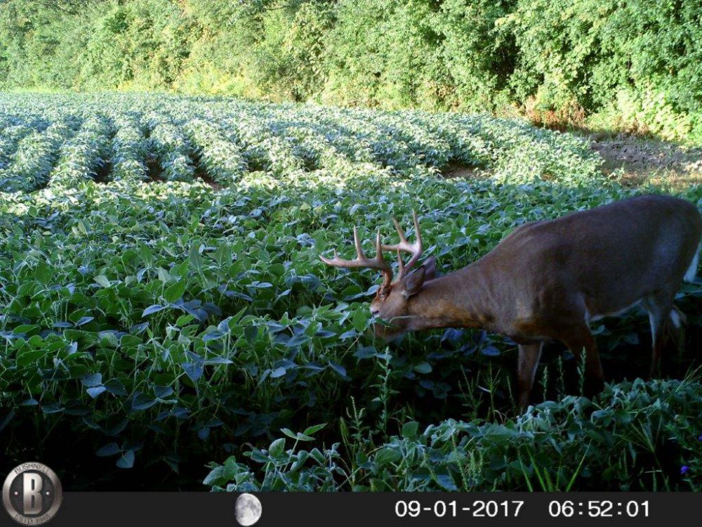 dream buck 2017 1.jpg