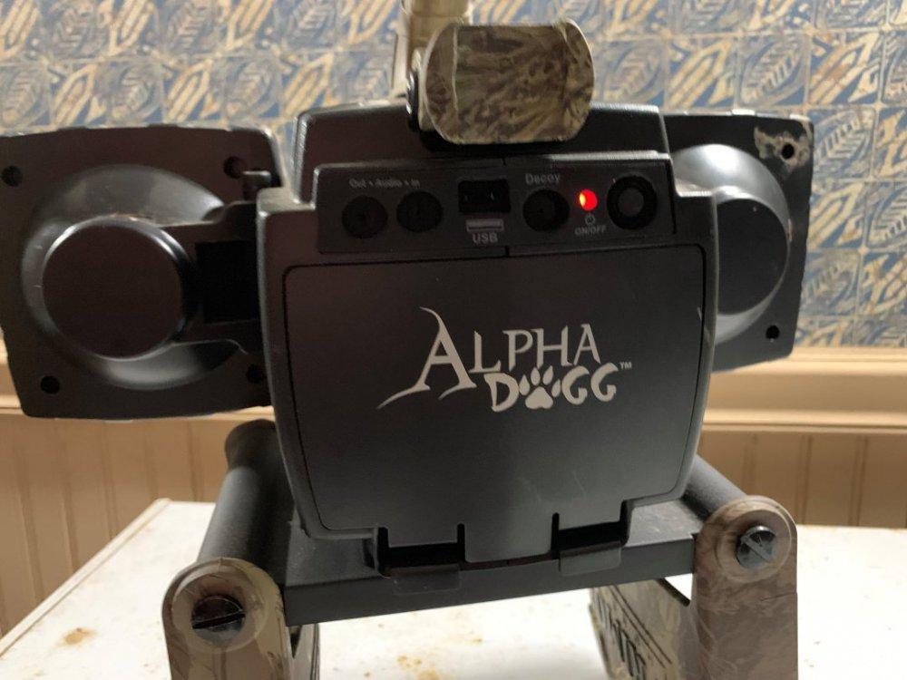 AlphaDog2.jpg