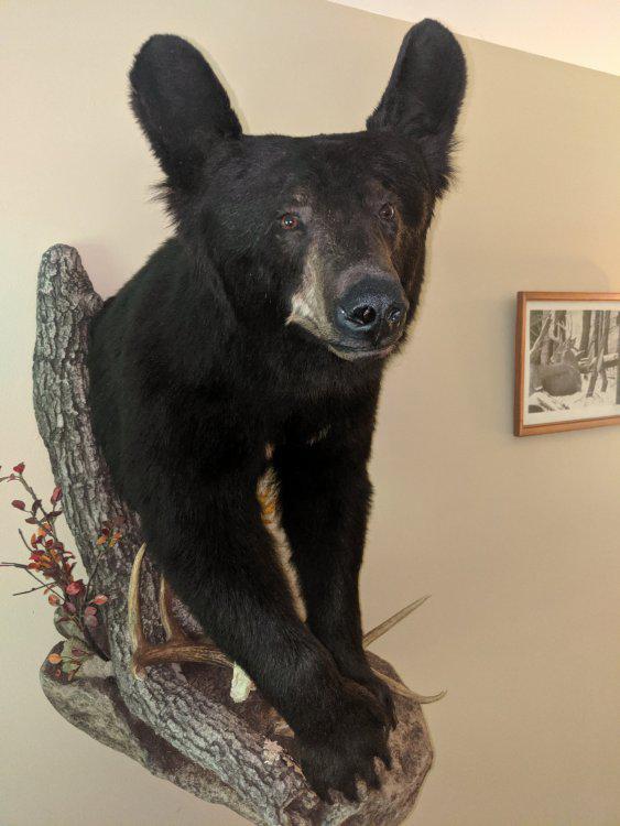 bearmount3.jpg