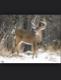 deerhunter1699